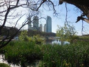 Puerto Madero vu depuis le parc écologique de Buenos Aires