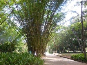 Le jardin botanique de Rio de Janeiro